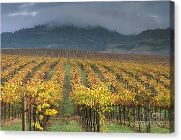 Clouds Over Alexander Valley Vineyard On A Fall Morning Canvas Print by Gary Crabbe