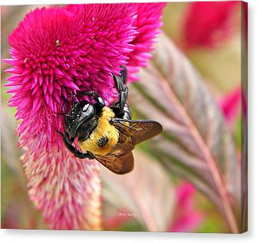 Cockscomb Canvas Print -  Cockscomb And Bumble Bee by Chris Berry
