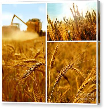 Collage Fields And Grain Canvas Print by Boon Mee