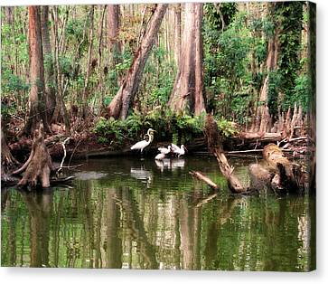 Cypress Swamp  Canvas Print by Peg Urban