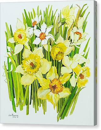 Daffodils And Narcissus Canvas Print by Joan Thewsey