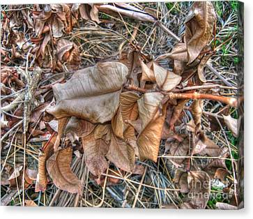 Canvas Print featuring the photograph  Dead Leaves by Michelle Meenawong