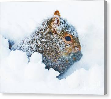 Deep Snow Squirrel Canvas Print by Judy Via-Wolff