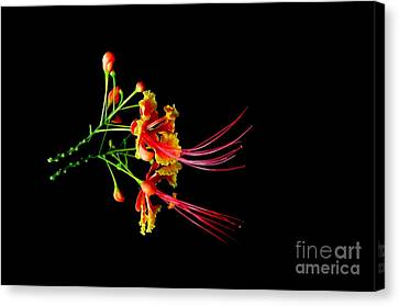 Canvas Print featuring the photograph  Delicacy by Michelle Meenawong