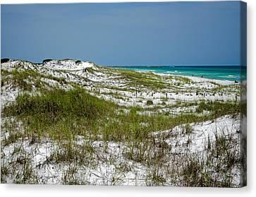 Canvas Print featuring the photograph  Dunes    Panama City Beach  by Susan  McMenamin