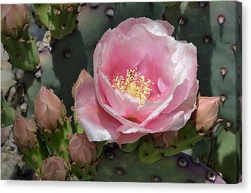 Durango Prickly Pear Canvas Print
