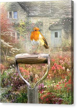English Robin Canvas Print
