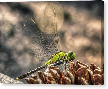 Canvas Print featuring the photograph  Erythemis Simplicicollis by Rob Sellers