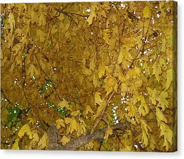 Canvas Print featuring the photograph  Fall Amur Maple  by J L Zarek