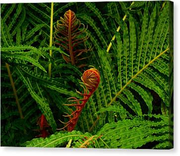 Cabin Wall Canvas Print -  Fiddlehead Fern Fronds by Movie Poster Prints