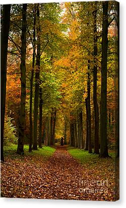 Canvas Print featuring the photograph  Footpath Carpet by Boon Mee