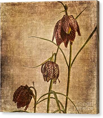 Meleagris Canvas Print -  Fritillaria Meleagris by Patricia Hofmeester