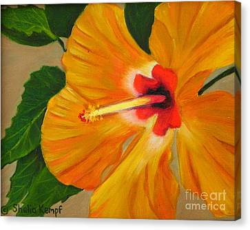 Golden Glow - Hibiscus Flower Canvas Print by Shelia Kempf