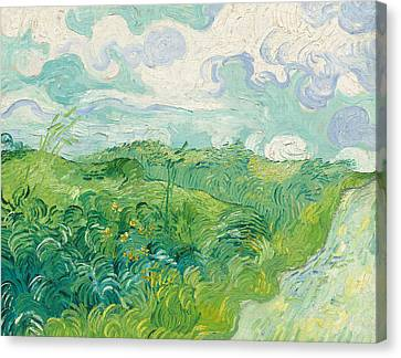 Green Wheat Fields Auvers Canvas Print by Vincent van Gogh