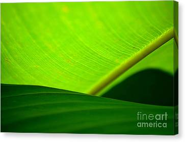 Canvas Print featuring the photograph  Greens by Michelle Meenawong