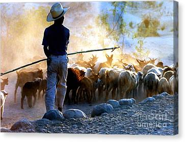 Herder Going Home In Mexico Canvas Print by Phyllis Kaltenbach