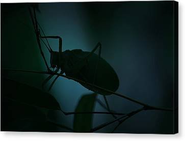 Canvas Print featuring the photograph  It's A Bug... by Tammy Schneider