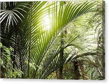 Jungle Light Canvas Print by Les Cunliffe