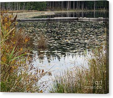 Lily Pads On Whonnock Lake Canvas Print by Joyce Gebauer