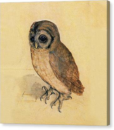 Little Owl Canvas Print by Albrecht Durer