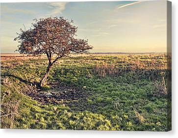 Lone Tree Canvas Print by Dave Godden