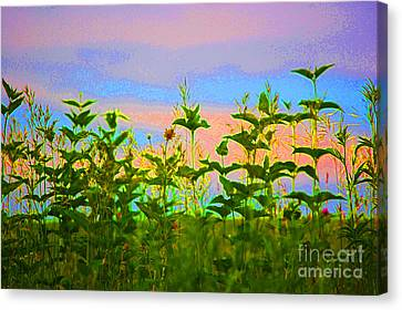 Meadow Magic Canvas Print by First Star Art