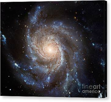 Messier 101 Canvas Print by Barbara McMahon