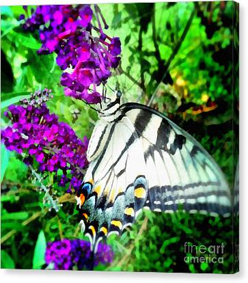 Monarch Butterfly Canvas Print by SiriSat