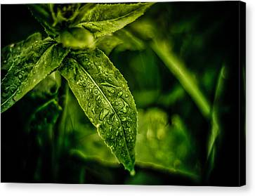 Canvas Print featuring the photograph  Morning Dew by Jason Naudi Photography