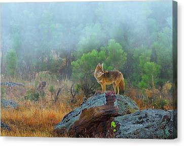 Canvas Print featuring the photograph '' Morning Patrol '' by Kadek Susanto