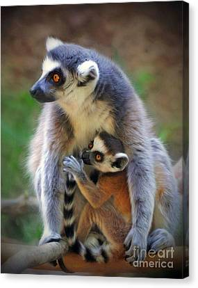 Canvas Print featuring the photograph    Mother And Baby Monkey by Savannah Gibbs