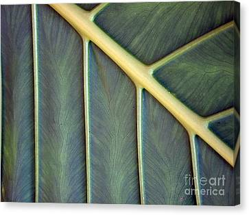 Canvas Print featuring the photograph  Nervures by Michelle Meenawong