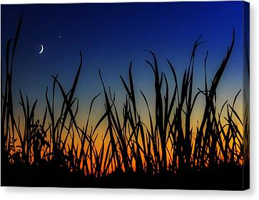 New Beginnings And Venus Smiles Canvas Print by Sylvia J Zarco
