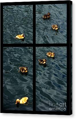Ducklings Canvas Print -  On Golden Duck Pond by Peter Piatt