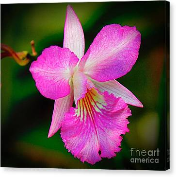 Orchid Flower Canvas Print by Nicola Fiscarelli