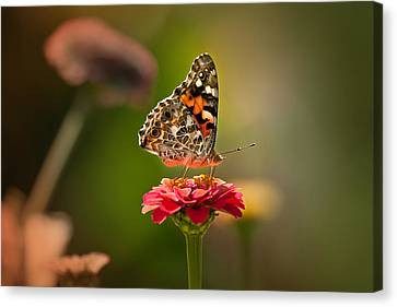 Painted Lady Summer Profile Canvas Print by Sylvia J Zarco