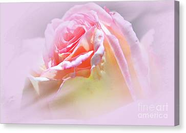 Peaceful Pink Rose Haze Canvas Print by Judy Palkimas