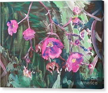 Ptg  Adirondack Wildflower Canvas Print by Judy Via-Wolff