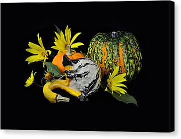 Pumpkins And Flowers In Black Canvas Print by Gynt