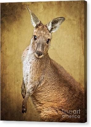 Kangaroo Canvas Print -  Roo Portrait by Jamie Pham