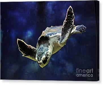 Canvas Print featuring the photograph  Sea Turtle by Savannah Gibbs