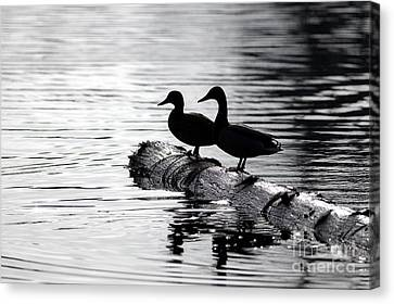 Silhouetted Ducks Canvas Print