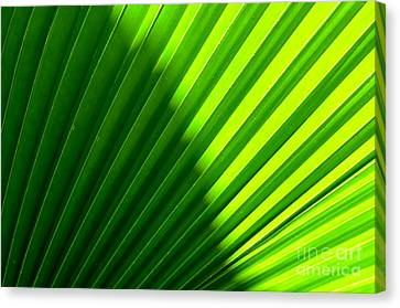 Canvas Print featuring the photograph  Simply Green by Michelle Meenawong