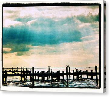 Stormy Rays On The Sea Birds Canvas Print by Belinda Lee