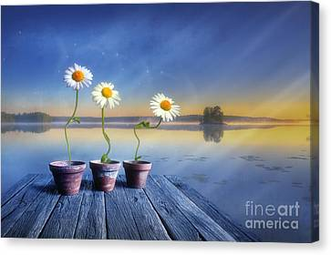 Summer Morning Magic Canvas Print by Veikko Suikkanen