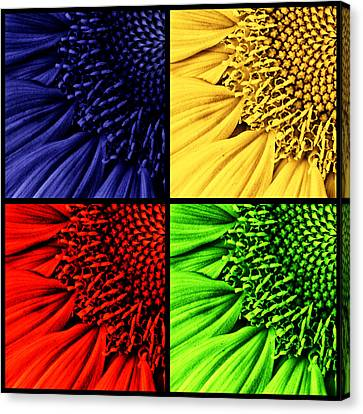 Sunflower Medley Canvas Print by Mark Kiver