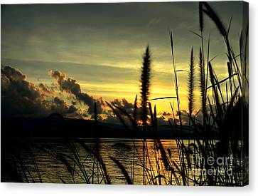 Sunset Canvas Print by Michelle Meenawong