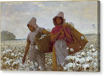 Cotton Farm Canvas Print -  The Cotton Pickers by Celestial Images