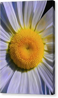 The Dainty Daisy Canvas Print by Timothy Hack