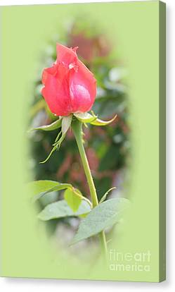 The Heart Of The Rose Canvas Print by Judy Palkimas